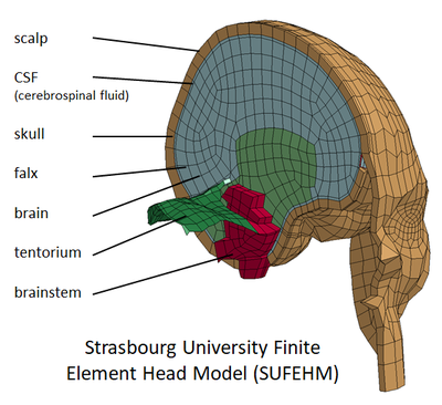 SUFEHM-HeadModel.png